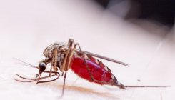 WHO warns malaria deaths could double anid COVID-19
