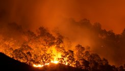 Jammu sets up 172 control rooms to prevent forest fires