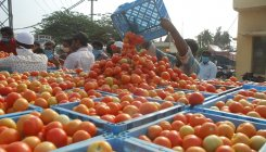 'Include tomato under weather-based crop insurance'