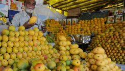 Mango, jackfruit season souring? Blame it on lockdown