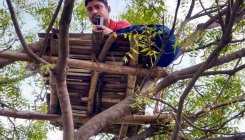 Teacher climbs tree to breach internet hurdle to teach