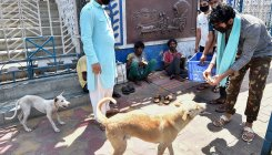 Lockdown: Odisha to spend Rs 54 L to feed stray animals