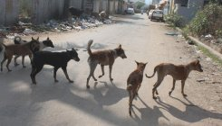 Stray dog menace: BBMP asks citizens not to throw food