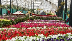 Political uncertainty clouds Lalbagh flower show