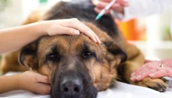 How to know if your pet is ill