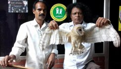 Rare owl rescued in Udupi