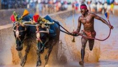 Boltesque sprint fast tracks Kambala jockey to fame
