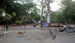 Cubbon Park birds get water after High Court steps in