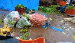 Rain damages fruits, vegetables at APMC yard