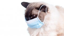 Cats can catch coronavirus, says study, prompting WHO