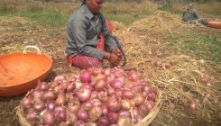Cooperative societies sell onions at less price