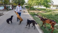 'Lockdown causing behavioural changes in stray dogs'