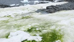 Climate change is turning Antarctica green: Study