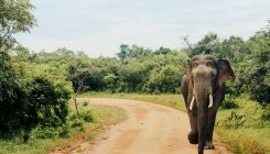 20 elephants chased back to forest