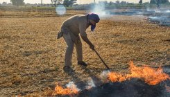 Punjab witnesses spurt in stubble burning incidents