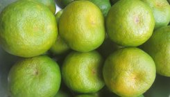 Demand and supply low for Kodagu orange
