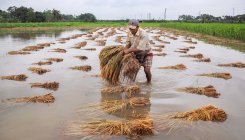 Amphan damages nearly 3L hectares of farmland in Bengal