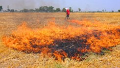 13,274 stubble-burning events in Punjab since mid-April