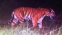Forest Dept rescues tiger at Handi Halla in Karnataka