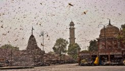 Locust attack: Drones mounted with pesticides deployed