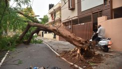 Clearance of fallen trees continues in Bengaluru