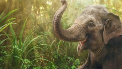 Elephant menace on the rise in Mudigere taluk