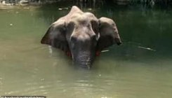'Kerala elephant did not eat for nearly 2 weeks'
