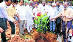 1L saplings to be planted on Chamundi Hill: minister