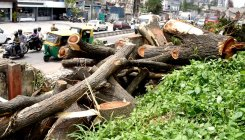 BMRCL cuts trees 10 hrs before HC hearing