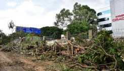 BMRCL cuts trees at night before HC hearing on matter