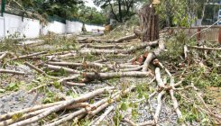 How forest dept allowed KRDCL to cut 1,676 trees