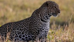 WB plans to set up country's largest leopard safari