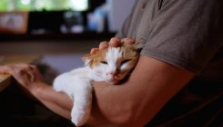 Women find men with cats less attractive, says study