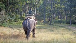 Good returns and misbeliefs trigger poaching in Kerala