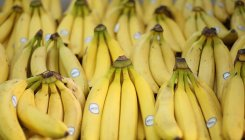 Easing of curbs helps Nanded banana growers to export