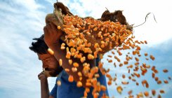 World food price index rises in June, first in 2020