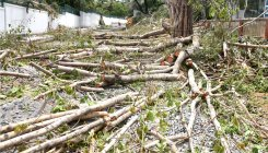 Planned approach can help reduce tree-felling in B'luru