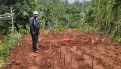 Powered by desire, Mescom man on mission to grow forest