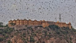 Govt steps up aerial spray of pesticide to fight locust