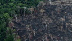 Amazon deforestation increases 25% in Brazil