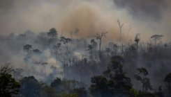 'Brazil too late to halt deforestation this year'