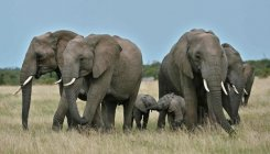 Kenya wildlife reserves threatened as tourism dwindles