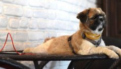 Lockdown loneliness led to more pet adoptions in India