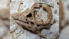 Fossil reveals 'one of the cutest dinosaurs' ever found