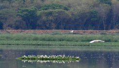 11 wetlands in Karnataka to get Centre's push