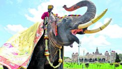 Covid-19 test on Dasara elephants, if required