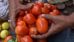 Retail tomato prices surge to Rs 80-85/kg in Delhi