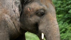 Elephant tramples 70-year-old woman to death in TN