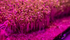 In Brazil, pandemic forces 'pink farm' to get creative