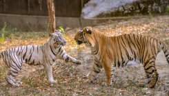 Delhi to get first wildlife rescue center by 2020-end